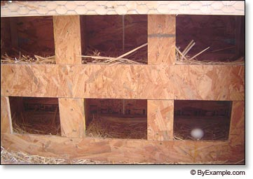 Nestbox Plans Dimensions For Homedesignpictures