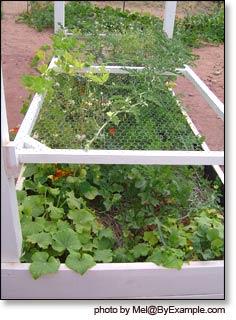 Constructing Raised Garden Beds — ByExample.com on