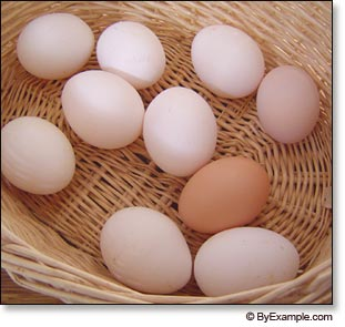 how to raise laying hens
